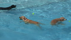Dogs swimming in pool on hot summer day in Kitchener Ontario Stock Footage