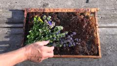 Hand placing various herbs on honeycomb Stock Footage