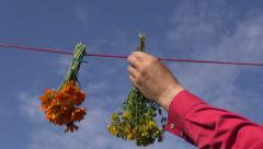 Hand hanging bunches of medical herbs on a string outside Stock Footage