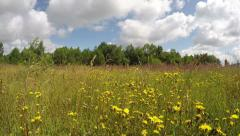 Green flowering wild meadow with bushes, time lapse 4K Stock Footage