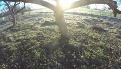 Sun through old apple tree in morning, time lapse 4K Stock Footage