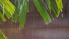 Rain dripping from parm tree leaf,Siem Reap,Cambodia Stock Footage