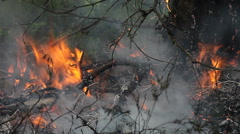Close up of forest ground fire. Stock Footage