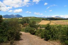 Stellenbosch hills - stock photo