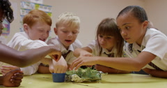 Group of children working together on science project Stock Footage