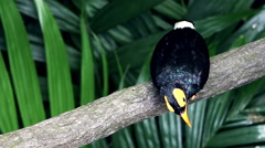 Tropical Bird Sitting on Branch and Looking Up Stock Footage