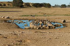 Waterhole at Kgalagadi Stock Photos