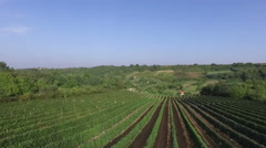 Aerial view of a vineyard during harvest season Stock Footage