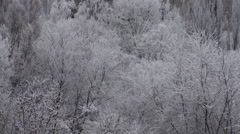 Winter Frost Trees Snowy Background Video Stock Footage
