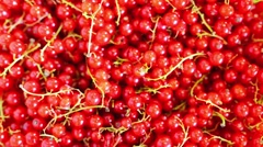 Seamless circular motion: red currant Stock Footage