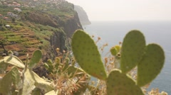 Cactus in front of a cliff line on Madeira, Portugal Stock Footage