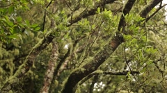 Forest in Semitropics on Madeira Stock Footage