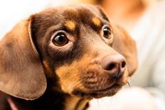 Close up mixed breed dog portrait Stock Photos