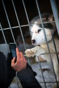 Many cute puppies locked in the cage Stock Photos