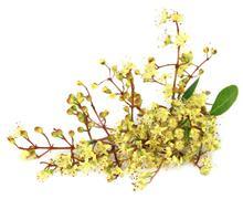 Ayurvedic henna flower - stock photo