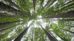 Looking up into forest canopy, camera rotating - stock footage
