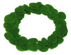 Edible moringa leaves make a frame Stock Photos