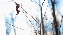 Spider web and a small tree in the forest in sunny weather - stock footage