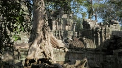 Stock Video Footage of Overgrown temple in Ta Prohm,Siem Reap,Cambodia