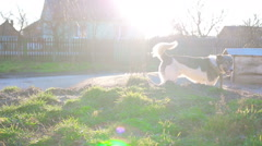 A dog on a chain Stock Footage