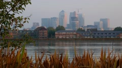 Canary Wharf at dawn frames by long grass and trees Stock Footage