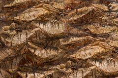 Backgroundon the basis texture of bark of the date palm Stock Photos