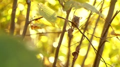 Mouse on a Branch in the Autumn Forest - stock footage