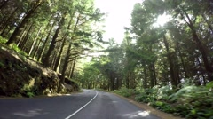 Driving in Forest, Subtropical Stock Footage