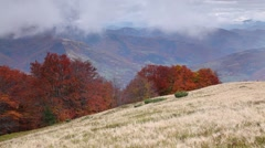 Colorful autumn morning in the foggy Carpathian mountains. Stock Footage