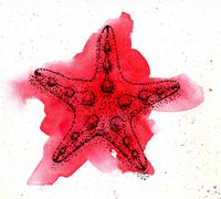 Picture starfish. Watercolor and ink Stock Illustration