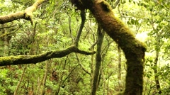 Forest in Subtropics on Madeira Stock Footage