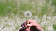 Man is blowing on dandelion on sunny day Stock Footage