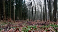 4k Forest panning shot while winter season without snow Stock Footage