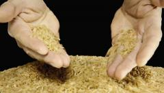 Rice raw hands show Stock Footage
