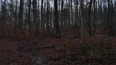 4k Forest panning winter season after sunset no snow Stock Footage
