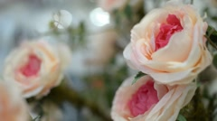 Beautiful white roses in a bouquet - interior decoration - stock footage