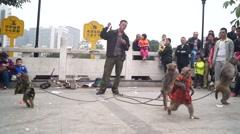 Shenzhen, Chinese: Street monkey show Stock Footage
