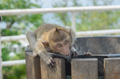 Portrait of a monkey in wildlife. - stock photo