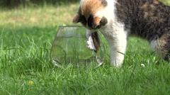Cat catch fish bowl Stock Footage