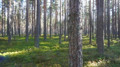 Walking in the north forest, Karelia, Russia Stock Footage