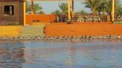 Park hotel in Sharm El Sheikh, Egypt, Sharm El Sheikh Stock Footage