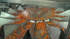 Harvesting carrots dispenser on the production.MTS Stock Footage