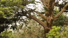 View of a tree in the subtropics, Madeira Island, Portugal Stock Footage