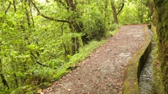 Levada canal on the island Madeira, Portugal. Stock Footage