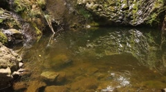 Little lake in a forest, Madeira, portugal Stock Footage