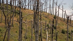 Forest after a forest fire, Madeira, Portugal Stock Footage