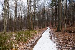Footpath in deciduous winter wood - stock photo