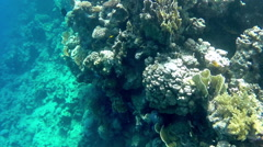 Undersea world. Beautiful view of corals, close-up Stock Footage