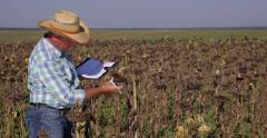Countryside Farmer Man Analyze Sunflower Harvest Quality Notes Farming Results Stock Footage