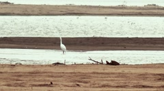 Herons standing on the sand island. Full HD footage. Stock Footage